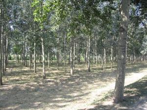 beijing forest